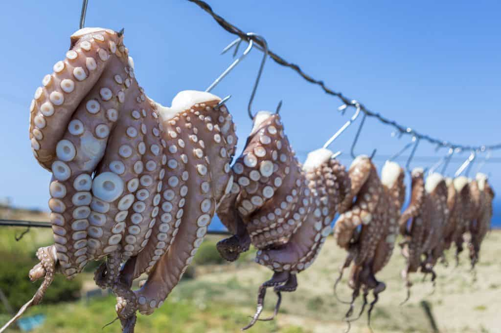 Sun dried Octopus , traditional fishing in Greece